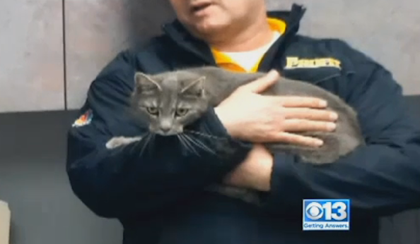 Stowaway Cat Rescued After 60-Mile Joy Ride Atop Trailer