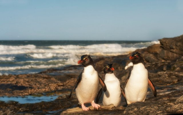 Penguin Pictures for World Penguin Day