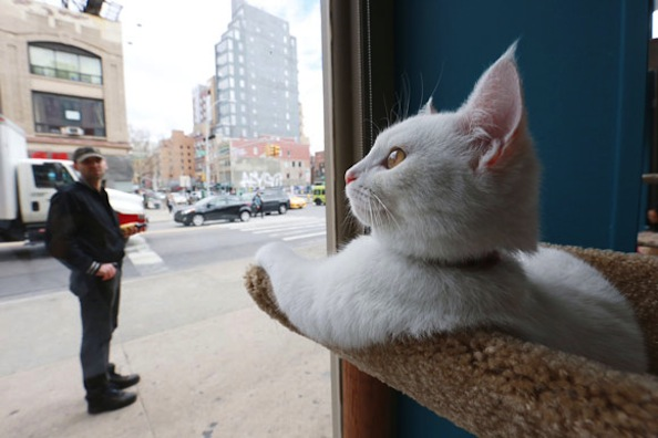 First Pop-Up Cat Cafe in North America Now Open in New York