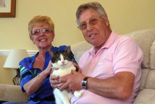 Missing Cat Found in Owners' Donated Couch 5 Days Later