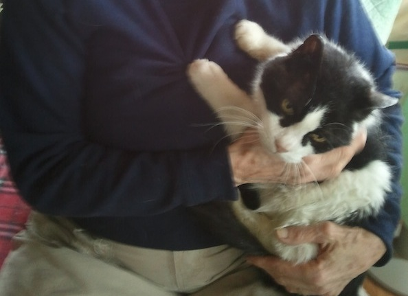Ferguson the Cat Goes From Being Abandoned in Storm to Loving Home