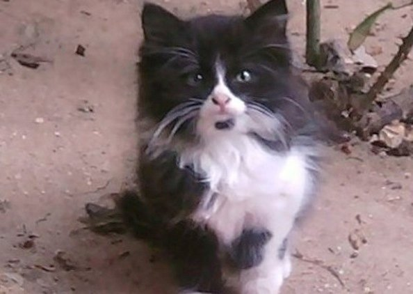 Meet KiKi Mow the Cat: Can He Be a Possible Reincarnation?