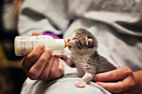 Rescued Kitten Gets Second Chance at Life Thanks to Foster Program