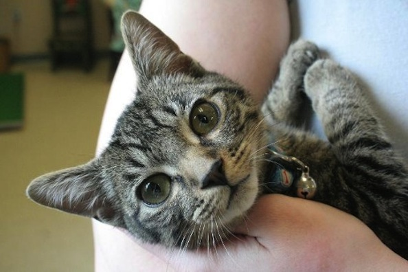 Cat Rescued From Alleged Cat Killer's Home is Going Up For Adoption