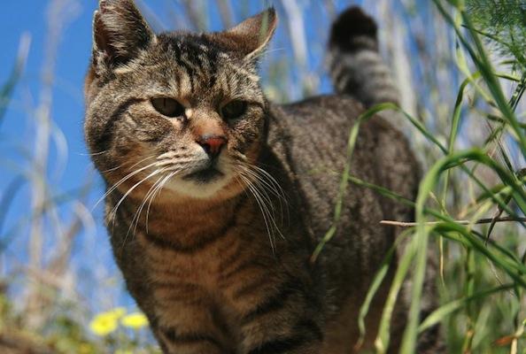 Project Bay Cat TimmyBob Makes His Return Home After Life-Saving Surgeries