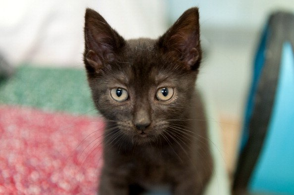 The 10 Most Popular Cat Names in the World