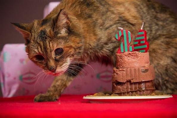 Meet Poppy, the World's Oldest Living Cat