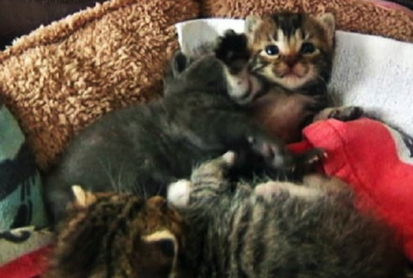 Rescue Kittens Found in Abandoned Car Towed to Auto Shop
