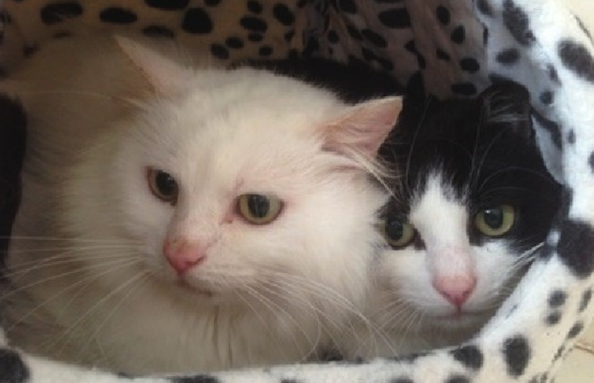 Cat Family Rescued From Deceased Owner's Home Looking to Be Adopted