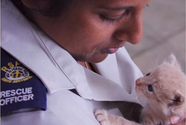 Tiny Kitten Rescued After Being Found Trapped Inside Wall