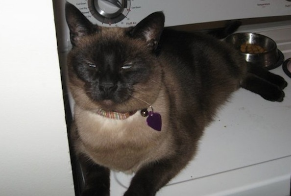 Hallie the Rescue Cat Helps Heal a Broken Heart