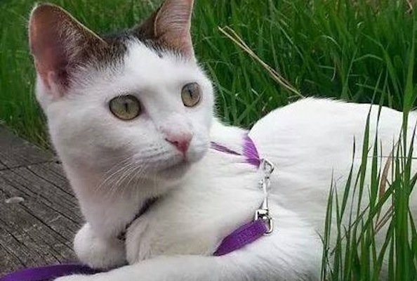 Rescue Cat Saved From Paper Shredder Finds Loving Home