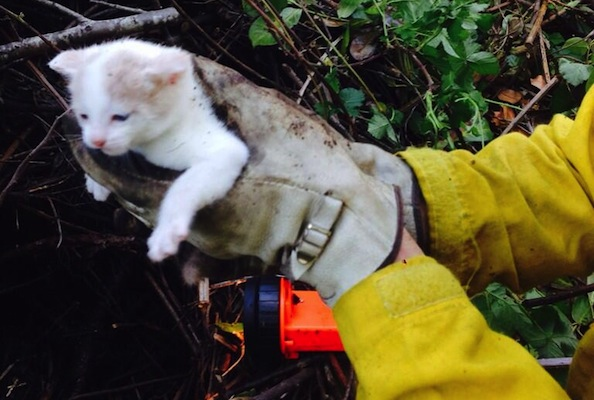Rescued Kitten in Oregon Saved and Adopted By Firefighters