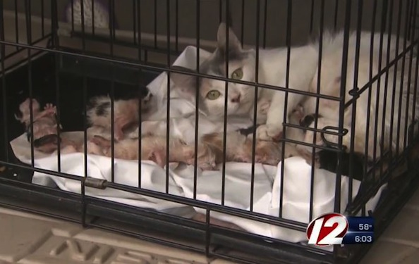 Cat Rescued From Burning Building While Delivering Her Kittens