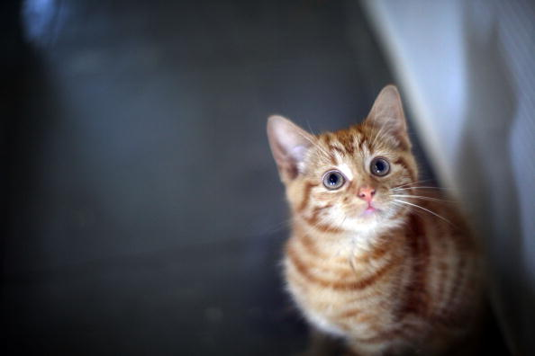 The Best Ways to Take Care of Munchkin Cats