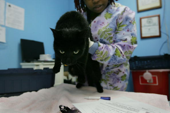 Five Important Cat Vaccinations You Should be Aware Of
