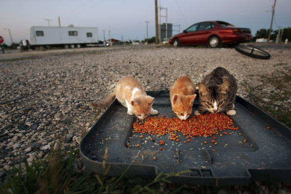 The Five Best Dry Cat Foods on the Market