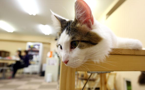 The Best Tips on How to Make a Cat Tree