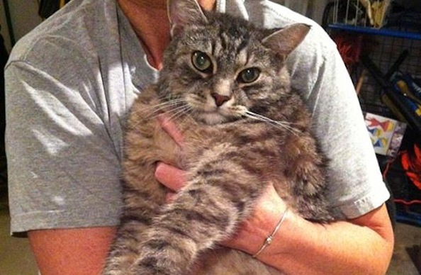 Jogger Rescues Drowning Tabby Cat in Carrier