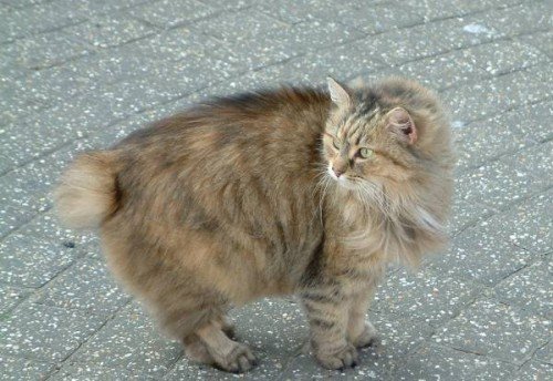 cat breed personality test