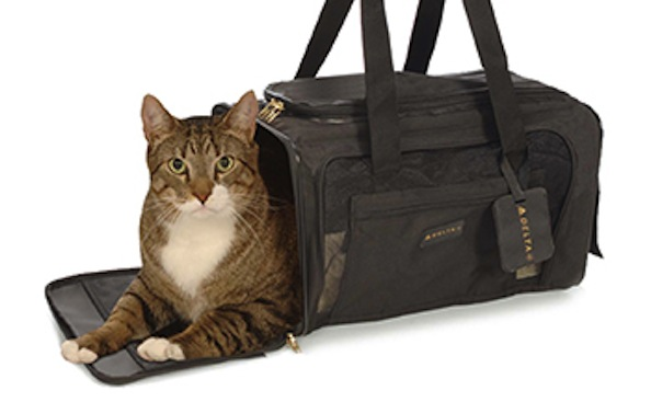 Five Suggestions for Cat Carriers