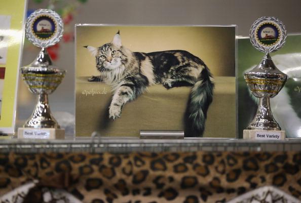 Ten Fun Hobbies For Cats