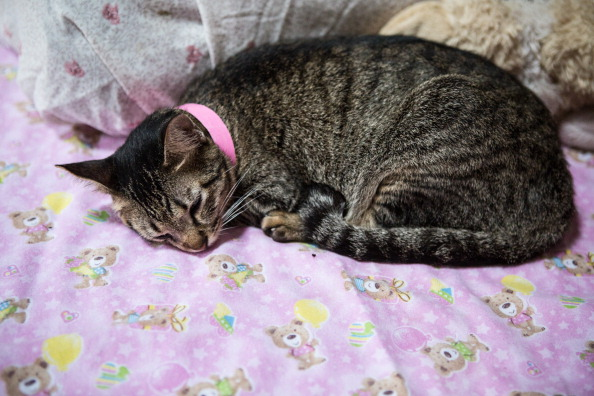 How to Tackle Arthritis and Joint Pain in Cats