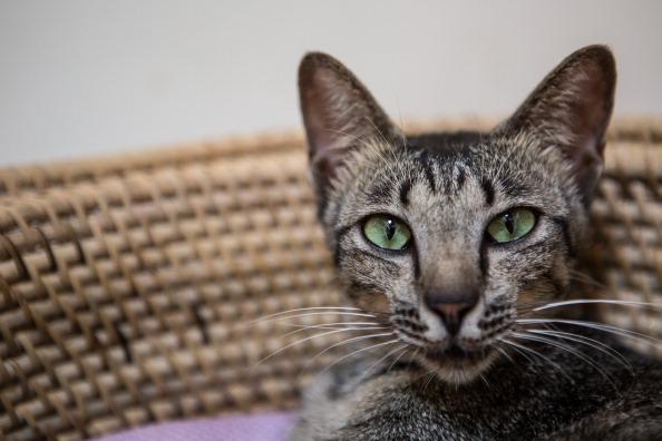 Ten of the Weirdest Cat Behaviors Explained