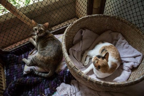 Ten Cat Diseases Common to All Breeds