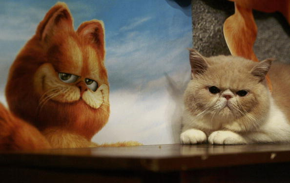 A List of Great Cat Movies for Children