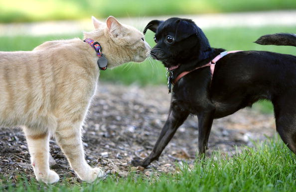 How Cats Can Be Easier to Live With Than Dogs