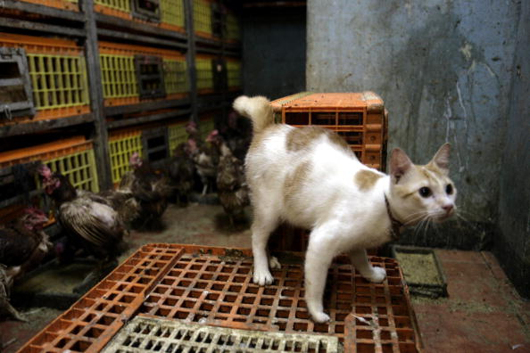 Parasite in Cat Droppings Is Promising for Treatment of Cancer
