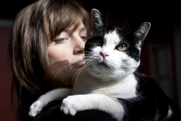 10 Ways To Tell Your Cat Is Mad At You