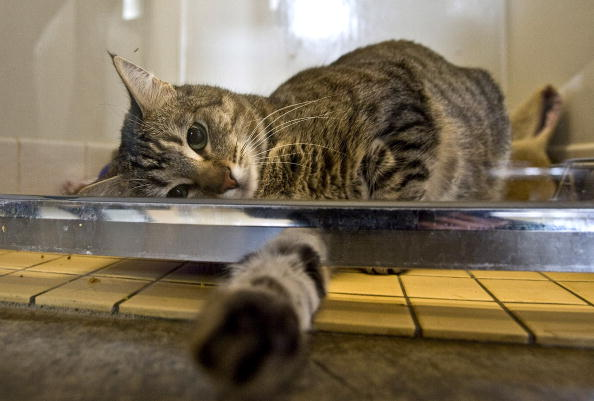 Household Activities Your Cat Might be Obsessed With