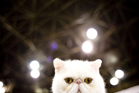 The Ten Most Common Mistakes New Cat Owners Make
