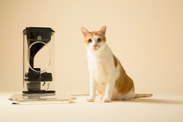 Check Out This High Tech Cat Feeder That Uses Facial Recognition
