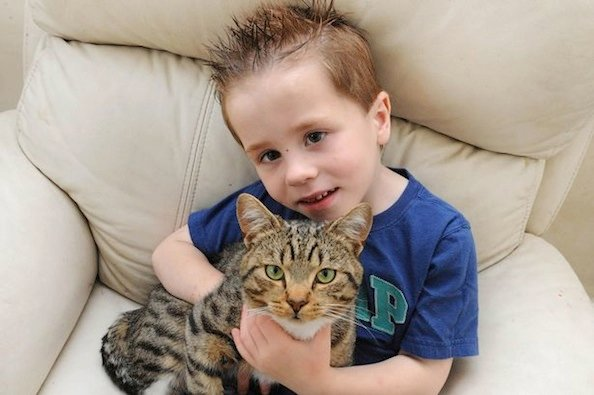 Heroic Cat Protects Five Year Old From Bullies
