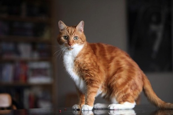 Cat Missing For More Than 18 Months is Found Safe 200 Miles Away