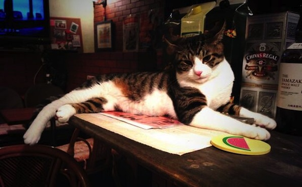 Did You Know There's a Cat Pub in Tokyo?