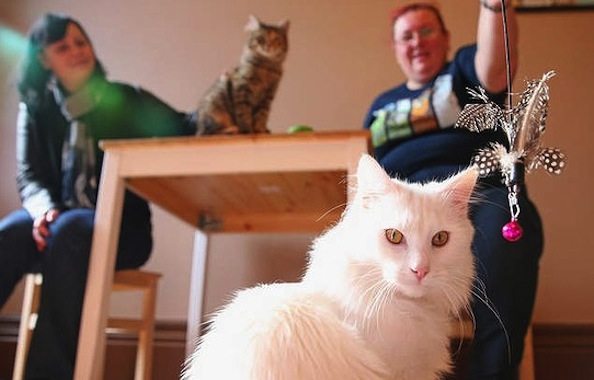 Australia's First Cat Cafe Opens in Melbourne