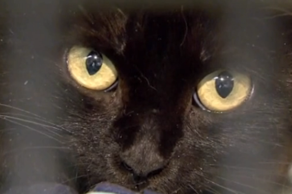 Cat Hoarder in Arizona is Facing Animal Cruelty Charges