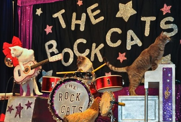 Wait a Minute, There's Actually a Cat Band in Real Life?
