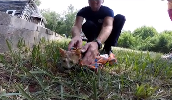 Fire Department Rescues Cat Captured on GoPro