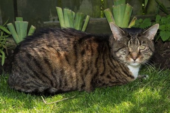 20-Year-Old Cat Overcomes Adversity: See How