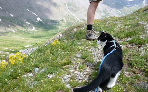 Amazing Cat Named Paul Climbs a Mountain