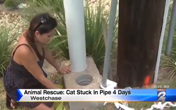 Cat Stuck in a Pipe For At Least 3 Days is Rescued