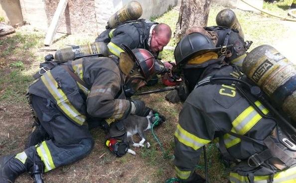 Amazing Cat Resuscitation Inspires Donations to Fire Department