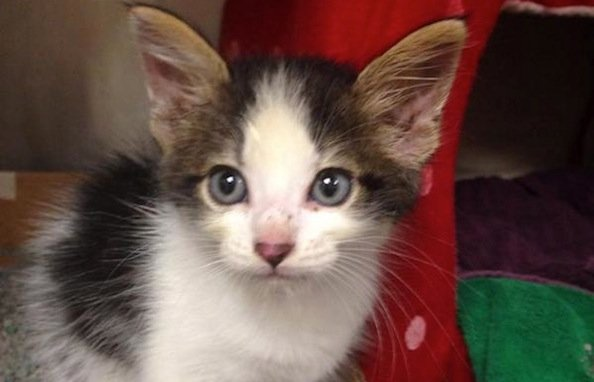 Check out this Amazing Four Hour Rescue Operation for a Cat