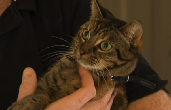 Heroic Cat Saves Family's Home from Fire