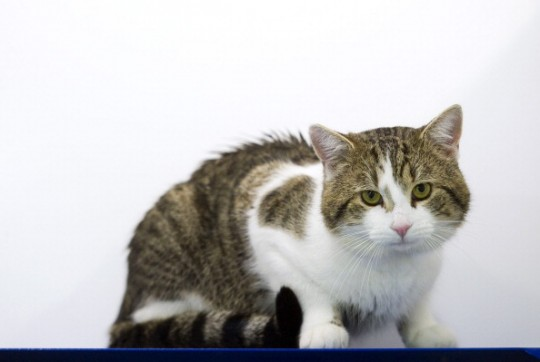 Can Cats Pass On Diseases To Humans